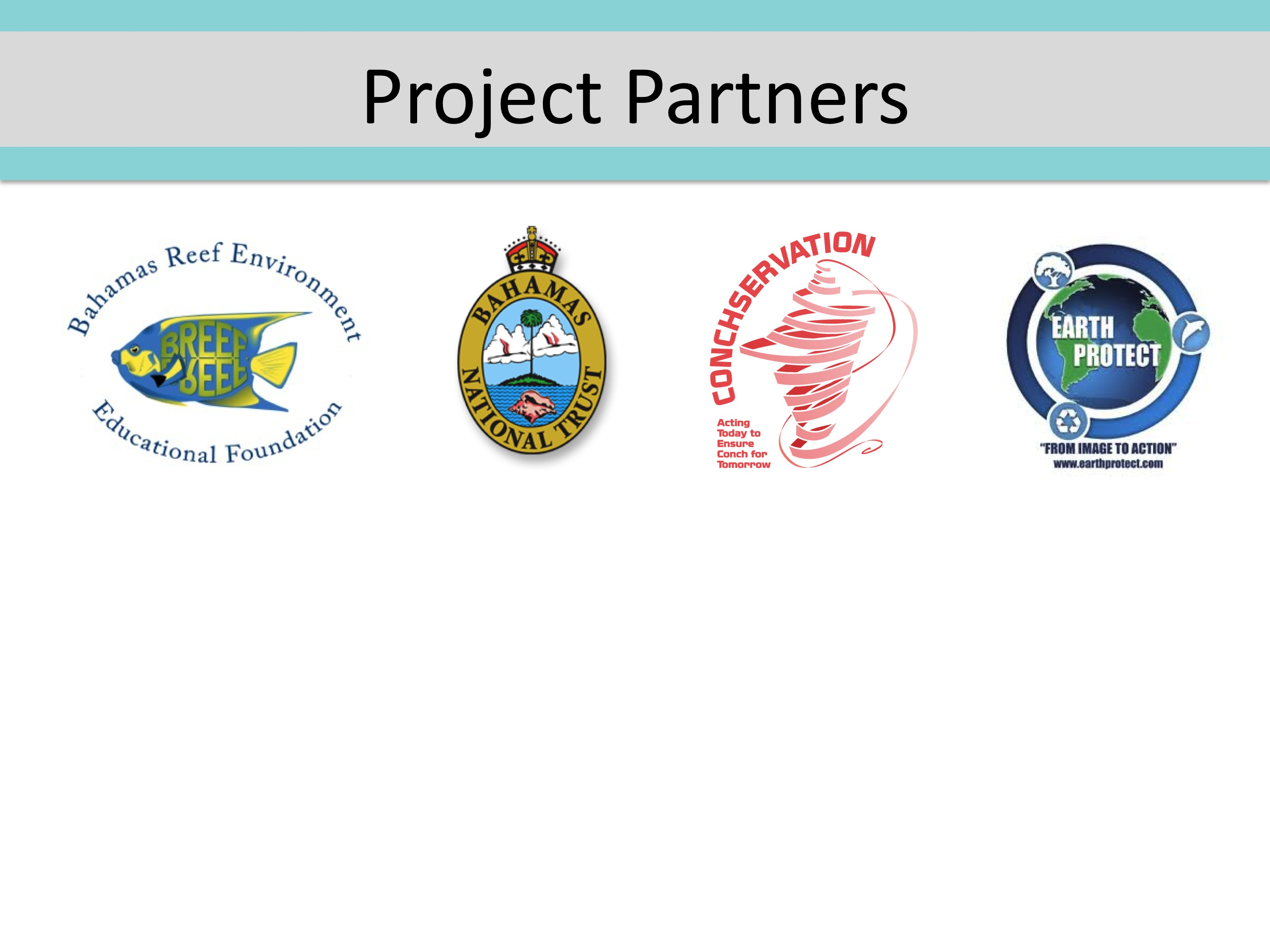 website project partners